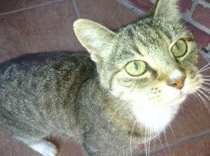 Tigress 1995 - 2014